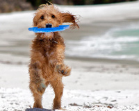 Dog Catched Frisbee