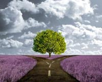 Crossroad Path In Lavender Meadow