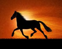 Horse And Freedom To Run