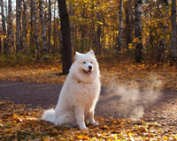 Dog In Nature Park
