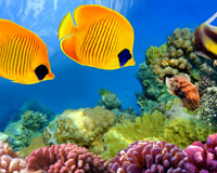 Underrwater Fishes